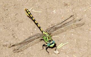 Insect, Spider and Kin Guide – Pajarito Environmental