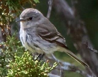 Bird Guide – Pajarito Environmental Education Center