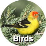 birds-circ-label