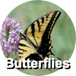 butterflies-circ-label