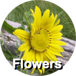 flowers-circ-label