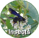 insect-circ-label