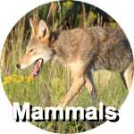 mammals-circ-label
