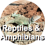 reptiles-circ-label