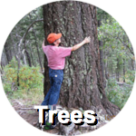 trees-circ-label