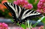 nature_guides_butterfly