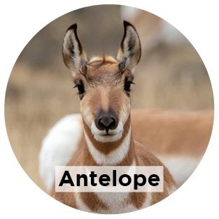 astro-circ-label