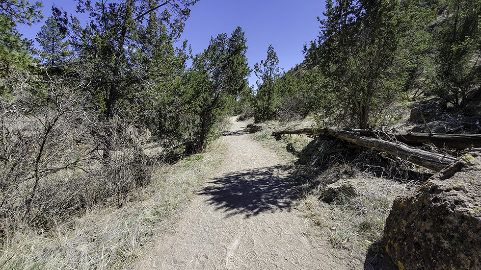 Sandy, wide trail surrounded by trees on both sides.