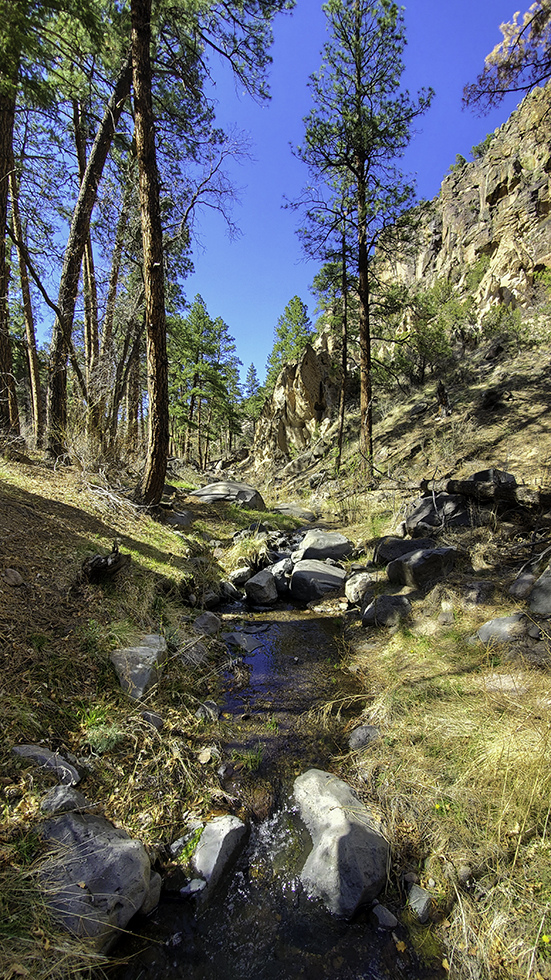 Creek flowing through the bottom of a canyon. Grass and rocks are around or in the creek with ponderosa pine trees nearby.