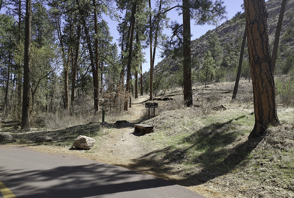 Trail going off of paved road surrounded by large ponderosa pine trees.